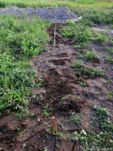 uitgezette palen in een tuin met onkruid